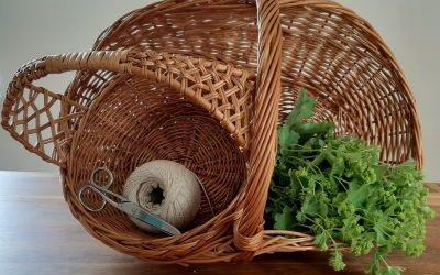 Kräuter richtig sammeln, trocknen und aufbewahren