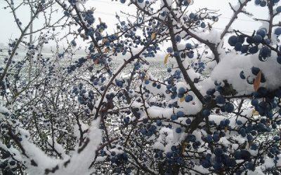 Stark durch den Winter